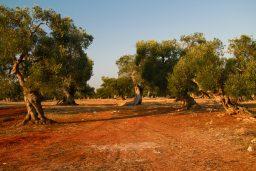 Visiting Apulia