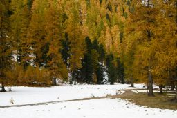 Fall Color in Engadin
