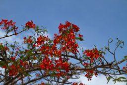 Zanzibar: Island of Spice