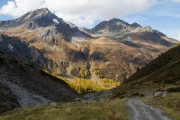 Through the Golden Larches of Engadin