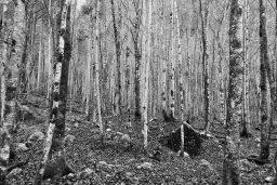 B&W Wednesday: Trees