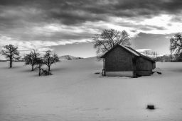 B&W Wednesday: Winter Orchard