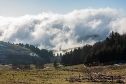 A Jaunt to the Black Forest