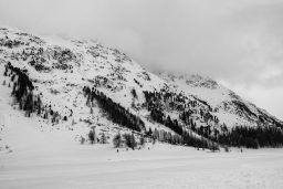 B&W Wednesday: Stillness of Snow