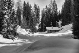B&W Wednesday: Cabin in the Woods