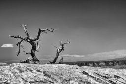 B&W Wednesday: Lone Tree