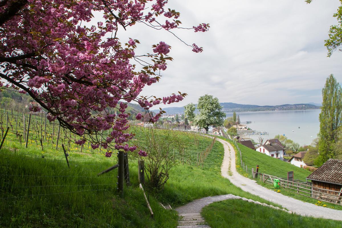 Along Lake Constance